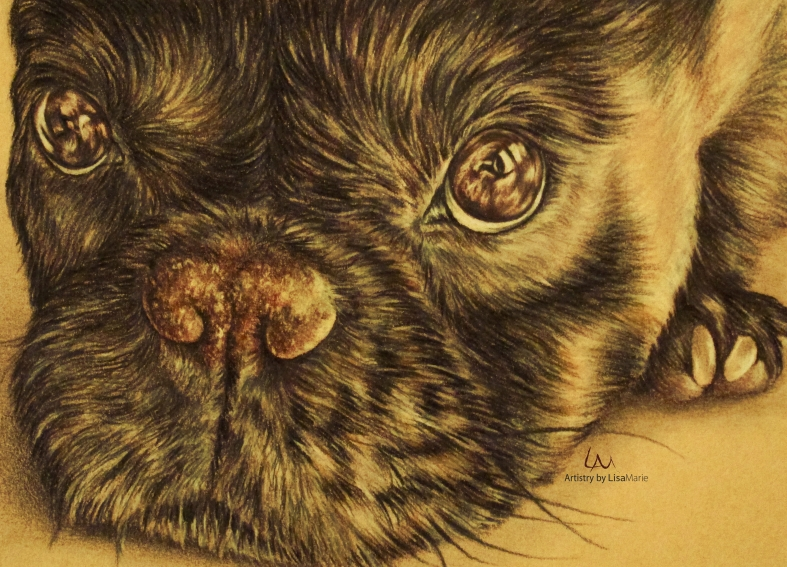 """""""Puppy Close Up"""" Colored Pencil on Yellow Watercolor Paper, 5"""" x 7"""""""
