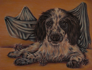 """Spaniel with Blue Drapery"" 8"" x 10"" Colored Pencil on Paper"