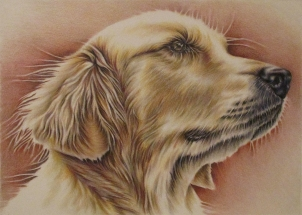 https://www.etsy.com/listing/234369221/golden-retriever-dog-drawing-8x10-dog?ref=shop_home_active_10